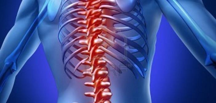 Curso de Osteopatía Dorsal y Cervical