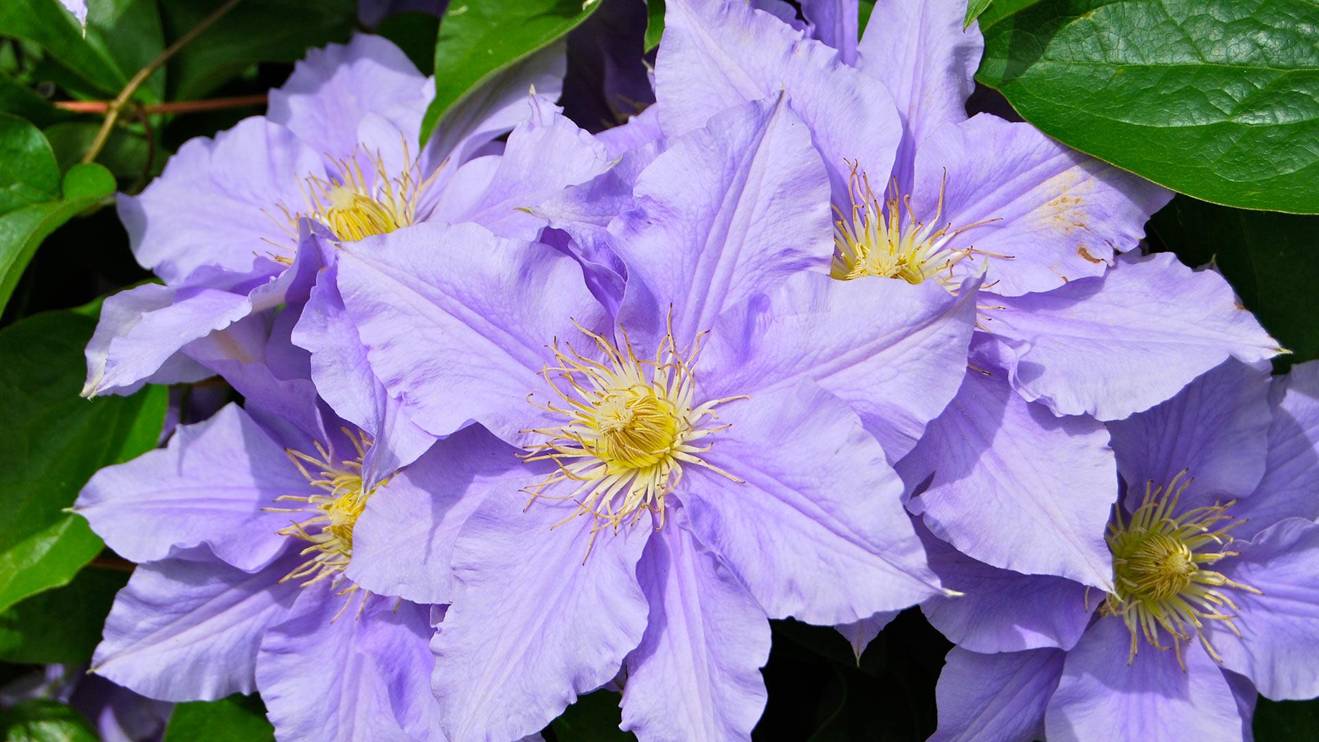 Taller de Flores de Bach