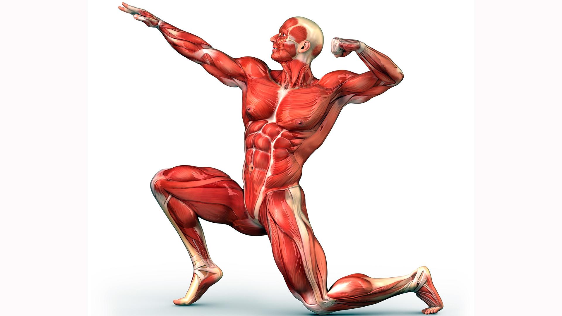 Taller de Readaptación Muscular