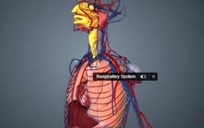 Aprender Anatomía con Modelos 3D