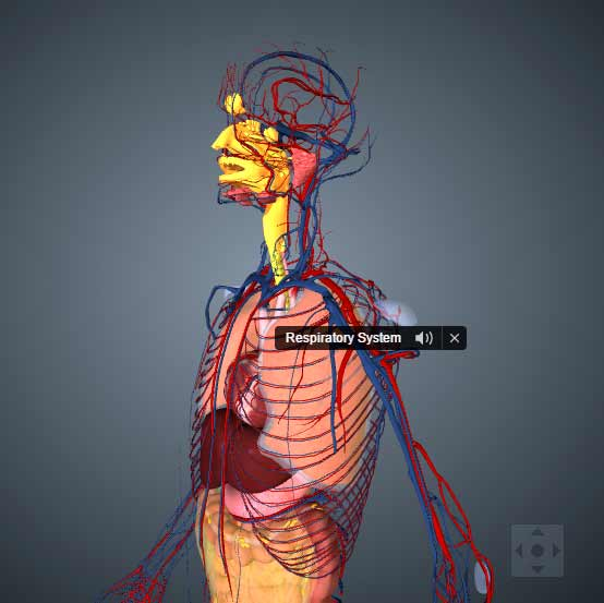 Bio Digital, Anatomía en 3D